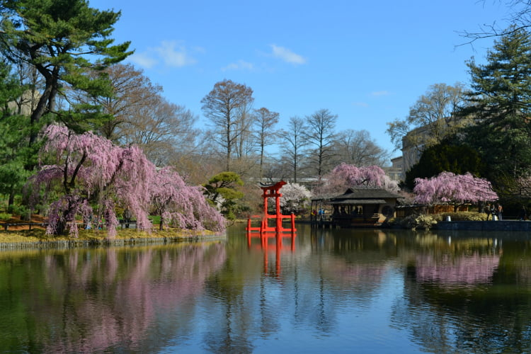 Brooklyn Botanic Gardens things to do in New York