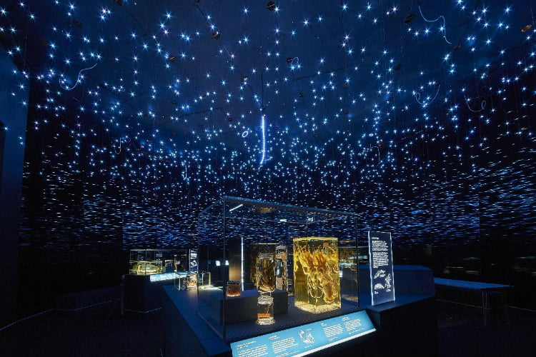 Natural History Museum - life in the dark