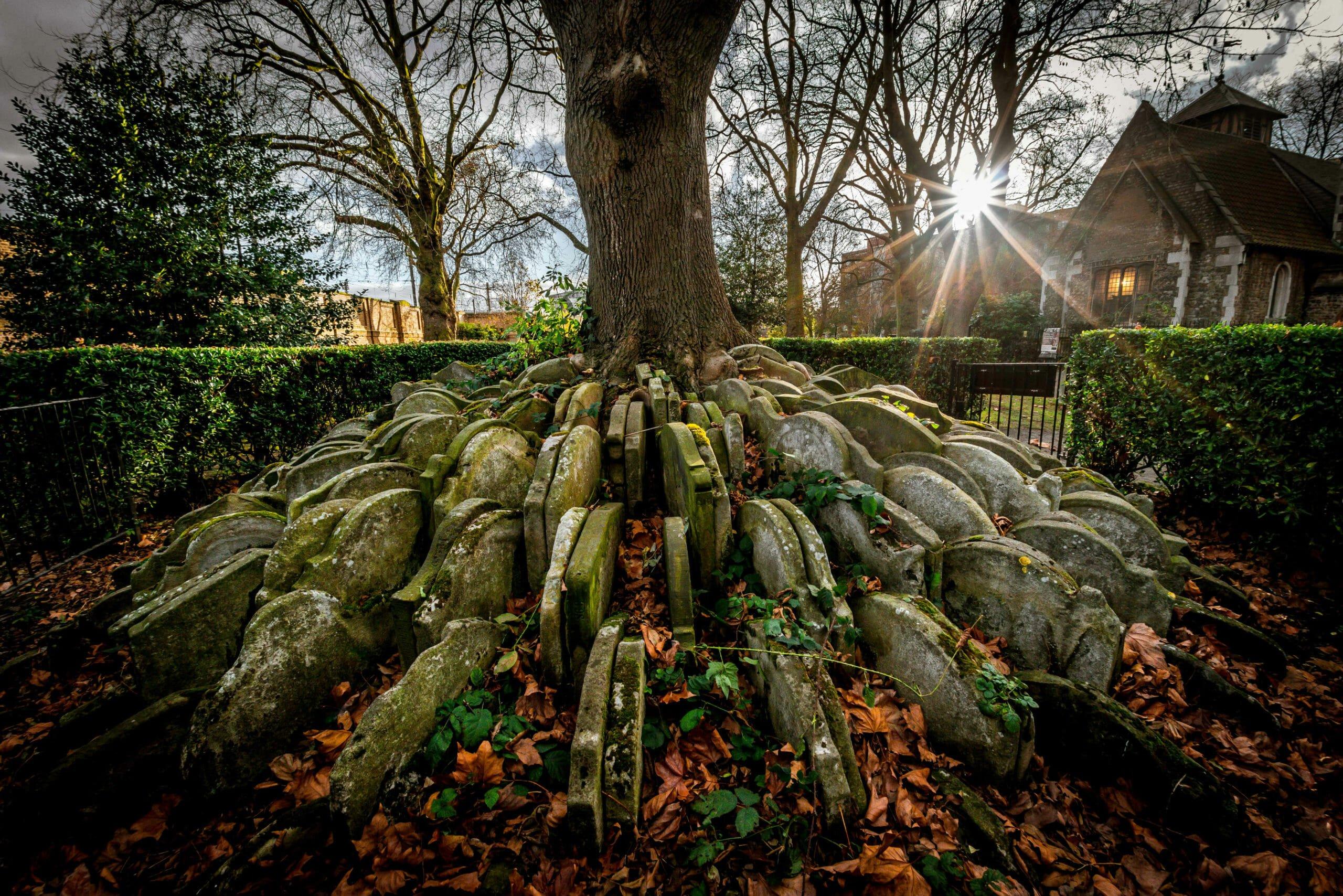 Thomas Hardy Graveyard