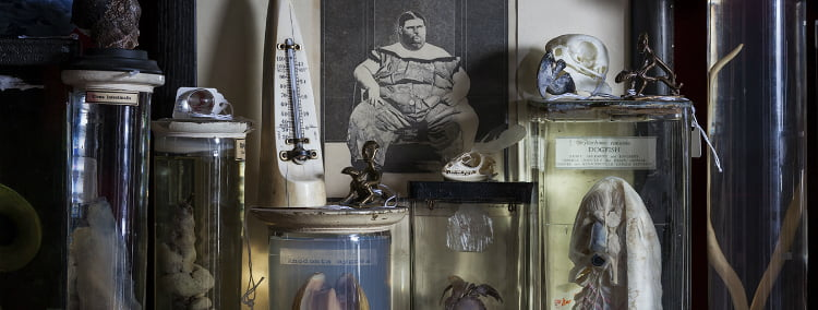 Viktor Wynd Museum of Curiosities - Unusual Museums in London