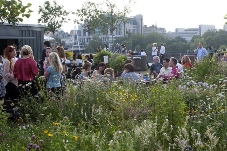 Queen Elizabeth Hall Southbank garden - london rooftop bars