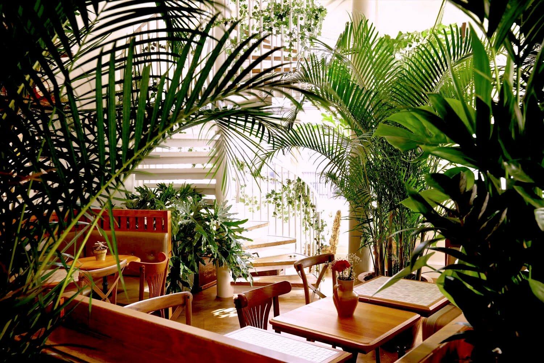mr foggs house of botanicals