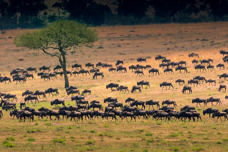Migration safari - adventure holidays for the brave
