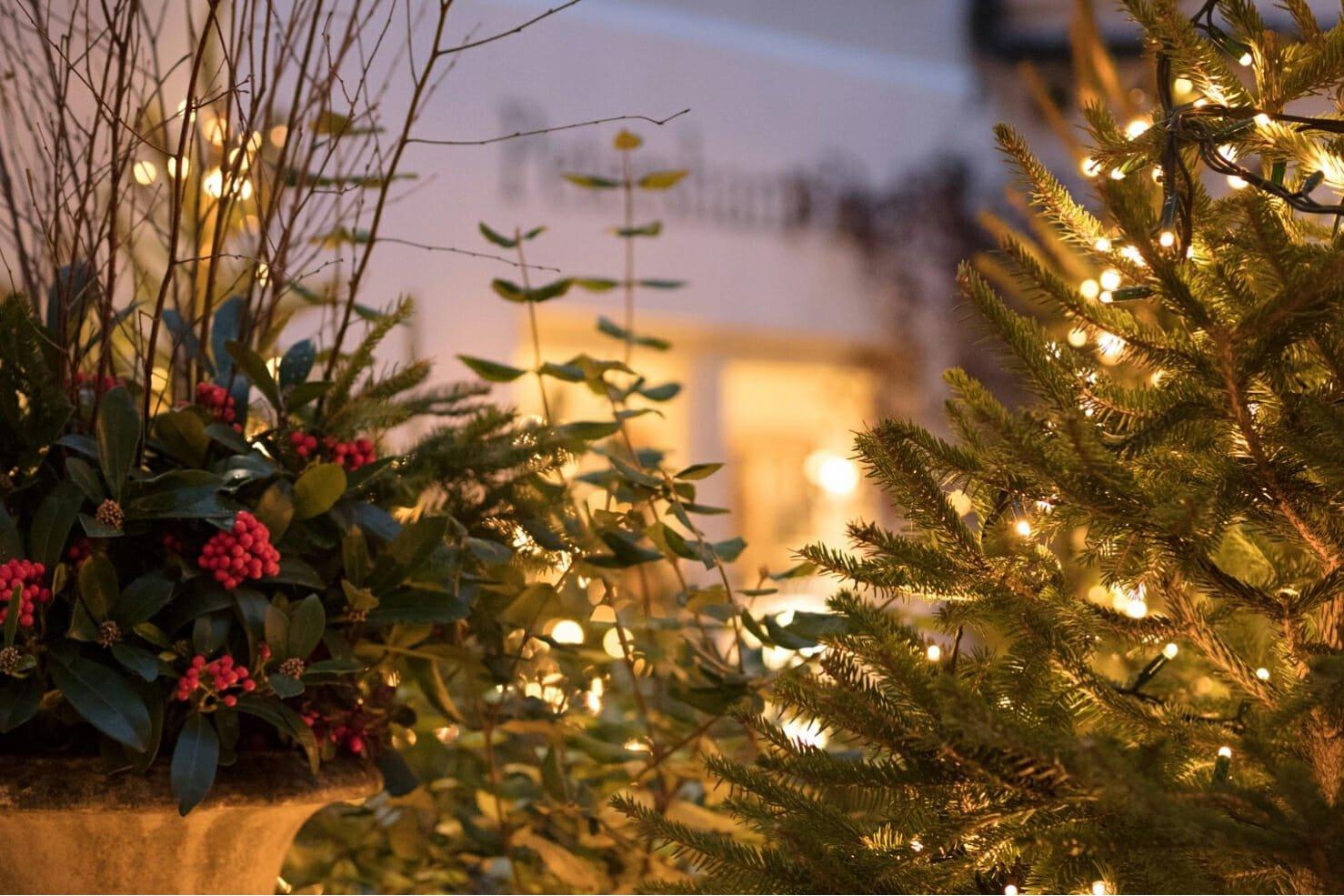 Petersham Nurseries Carols